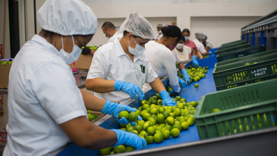 Sorting and packing limes at Valle Verde, Apartadó, Colombia