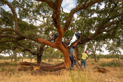The Portuguese cork harvest in Coruche, in the Ribatejo region by Joel Santos & Magali Tarouca.